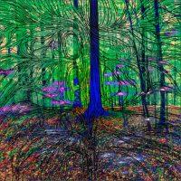 Dans les forêts - L'arbre bleu de forêt du Dählhölzli, BernePhotographie 50x50 cm