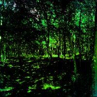 Paysages choisis 43 - La forêt de Fontainebleau - La lumière et les ombres Photographie Diptyque 200x70 cm